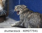 Stock photo an angry cat looking to an other cat 409077541
