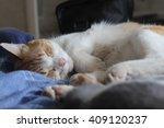 Stock photo kitten sleeping 409120237