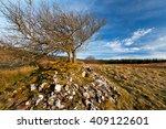 hawthorn trees growing on... | Shutterstock . vector #409122601