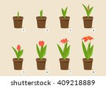 flower growth stages. vector set | Shutterstock .eps vector #409218889