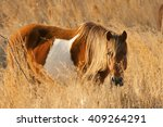 wild pony  horse  and... | Shutterstock . vector #409264291