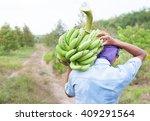 Farmer Bearing Green Banana On...