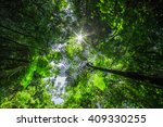 rainforest with the sun behind | Shutterstock . vector #409330255