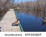 A Canada Goose Standing On A...