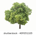 tree isolate on white background | Shutterstock . vector #409351105