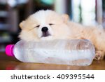 brown pomeranian dog sleeping... | Shutterstock . vector #409395544
