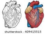 anatomical heart | Shutterstock .eps vector #409415515