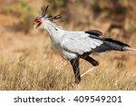Secretary Bird  Sagittarius...