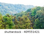 forest in doi inthanon national ... | Shutterstock . vector #409551421