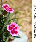 Mini Pink Carnation Flower