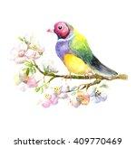 Beautiful Colorful Bird Sittin...