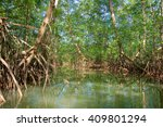 mangrove forest from central...   Shutterstock . vector #409801294