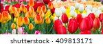 vibrant colorful  holiday or... | Shutterstock . vector #409813171