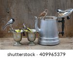 Sparrows Chickadees And...