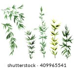 watercolor bamboo leaves | Shutterstock . vector #409965541