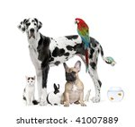 Stock photo group of pets standing in front of white background studio shot 41007889