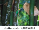 colorful bird long tailed... | Shutterstock . vector #410157061