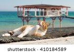 cute cat on the black sea in... | Shutterstock . vector #410184589