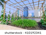 vegetable plantation in urban
