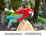 Green Wing Macaw. Parrot. Larg...