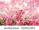 apple flowers spring blossom ... | Shutterstock . vector #410312491