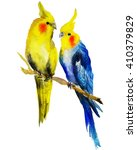watercolour parrot cockatiel.... | Shutterstock . vector #410379829