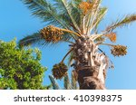 palm tree with date fruit. date ... | Shutterstock . vector #410398375