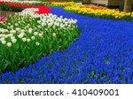 Blue Spring  Of Fresh Flowers ...