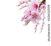 cherry tree branch with...   Shutterstock . vector #410410339