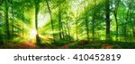 Beech Forest Panorama And The...