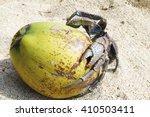 Coconut Crab On A Coconut Frui...
