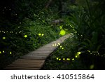 Stock photo fireflies in the bush at night in taiwan 410515864