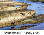 waterbuck in kruger national... | Shutterstock . vector #410571724