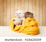 Stock photo white and grey kittens cute kittens in a yellow cotton textile isolated at wooden background 410620339