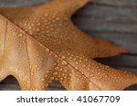 autumn leaf with dew drops in... | Shutterstock . vector #41067709
