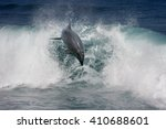 a wild dolphin jumping from...   Shutterstock . vector #410688601