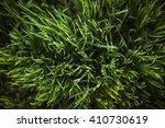 Dark Green Grass  Close Up