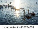 a flock of swans in the sunlight | Shutterstock . vector #410776654