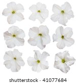 Petunia Flowers  Collection ...