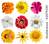 flowers collection isolated on...   Shutterstock . vector #41079190