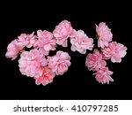 Pink Roses On Black Background