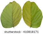 dry leaves  isolated on white... | Shutterstock . vector #410818171