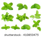Set Fresh Mint Isolated On The...