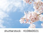 sakura or cherry blossom flower ... | Shutterstock . vector #410860021