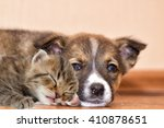 Stock photo little puppy and kitten 410878651