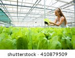 young adult woman gardening in... | Shutterstock . vector #410879509