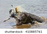 Crocodile Eats A Wildebeest In...