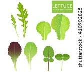 lettuce types vector. set of... | Shutterstock .eps vector #410902825