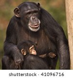 Mother Chimp Holding Baby