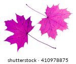 Two Pink Maple Leaves Isolated...